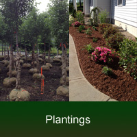plantings, shrubs & trees Installation in MA